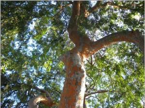 יער עץ פריחה ירוק